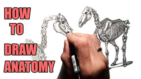 2d Animation Tutorial How To Study Anatomy Amb Animation Academy